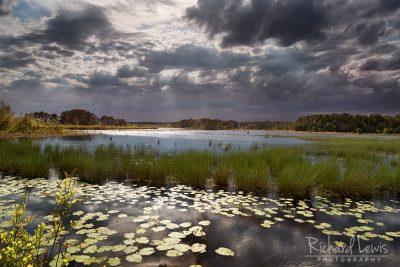 Franklin Parker Preserve Evening Light in the Pinelands by Richard Lewis