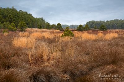 Winter Meadow in The Franklin Parker Preserve in The Pine Barrens by Richard Lewis