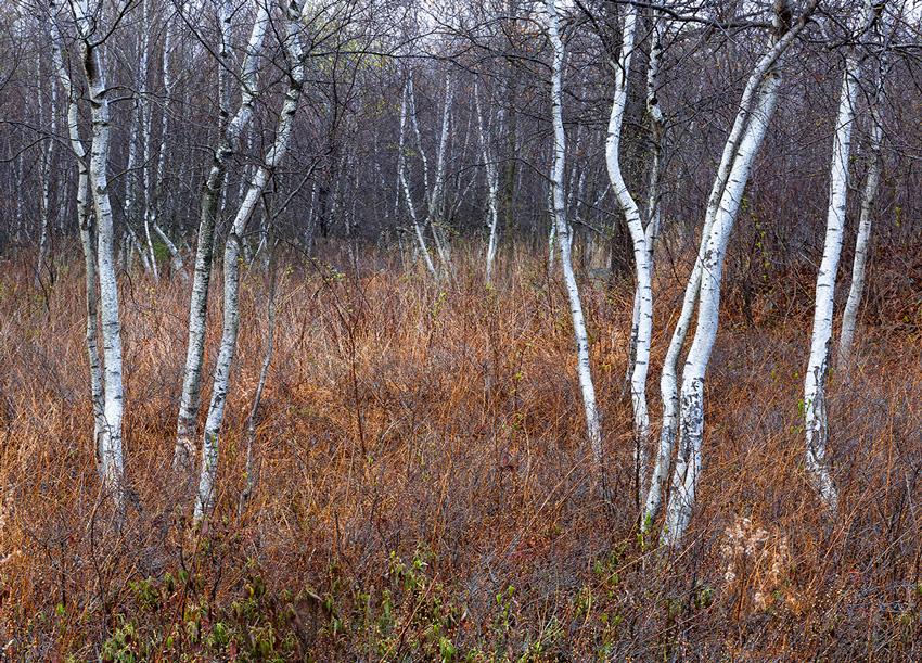 Birches Delaware Water Gap