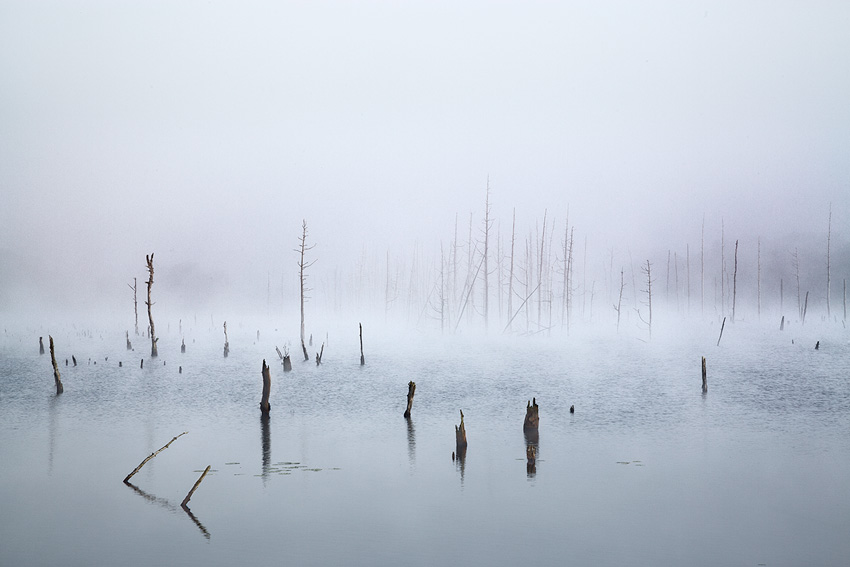 NJ Pinelands Photography by Richard Lewis