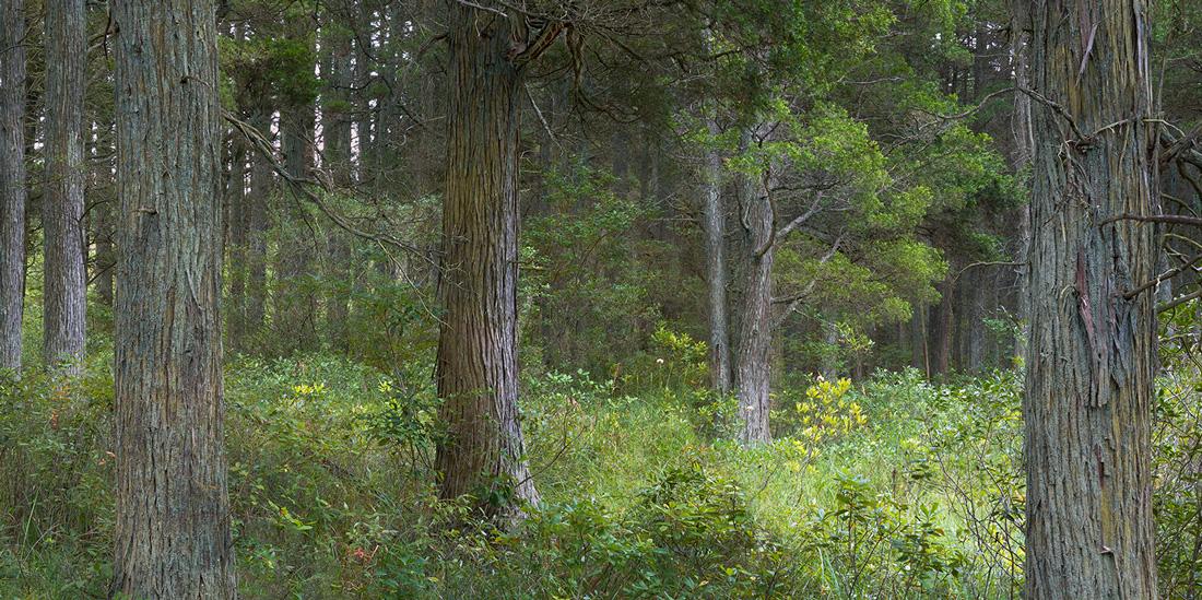 Warren Grove Pine Barrens