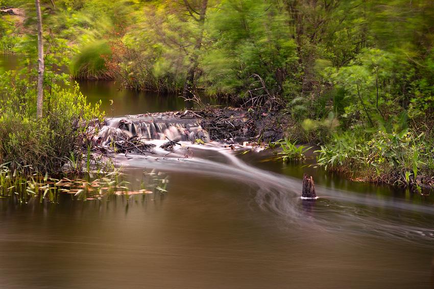 Mullica River in the NJ Pine Barrens