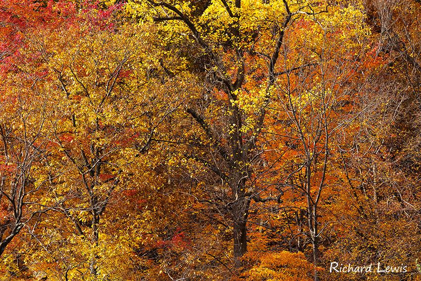 Fall Colors at Bear Mountain Lodge