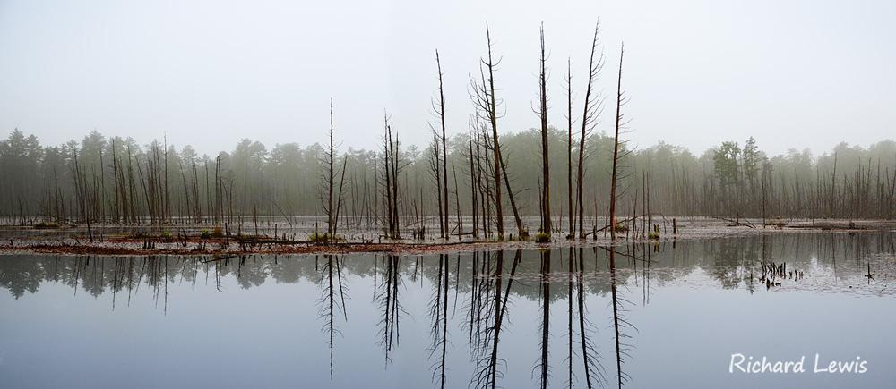 Goshen Pond Pine Barrens New Jersey