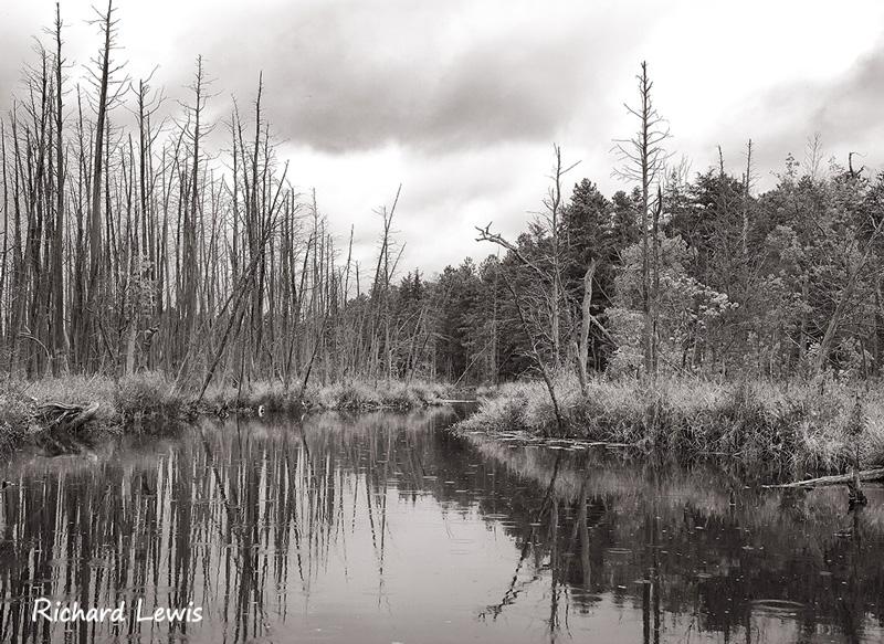 Wading River Atlantic White Cedar Swamp