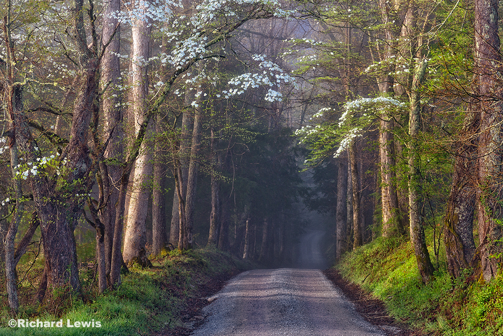 Sparks Lane in Cades Cove by Richard Lewis 2014