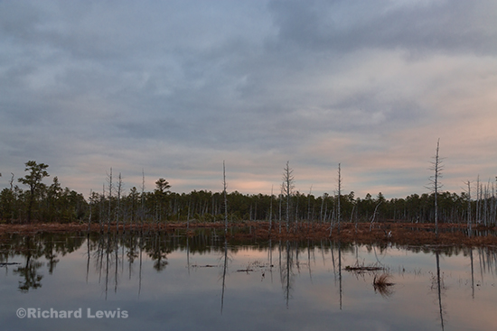 Along the Mullica River by Richard Lewis