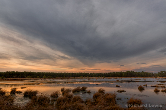 Dusk in the Swamp by Richard Lewis