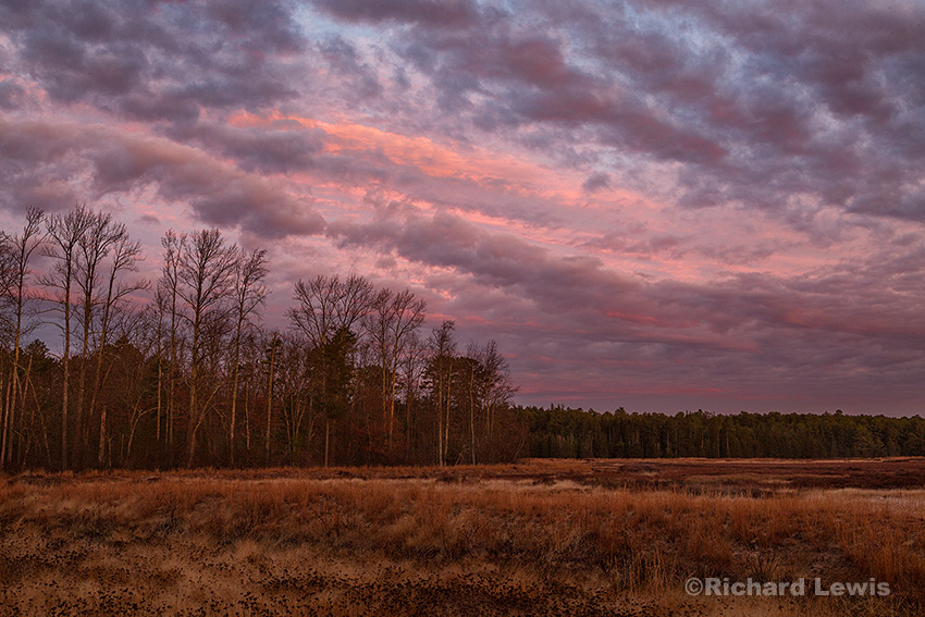 Fiery Morning by Richard Lewis 2015