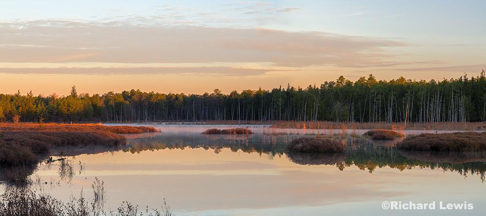 Morning Light in The Franklin Parker Preserve by Richard Lewis