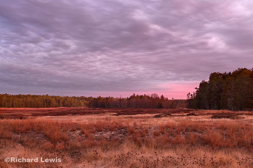 Dawn in An Old Bog by Richard Lewis