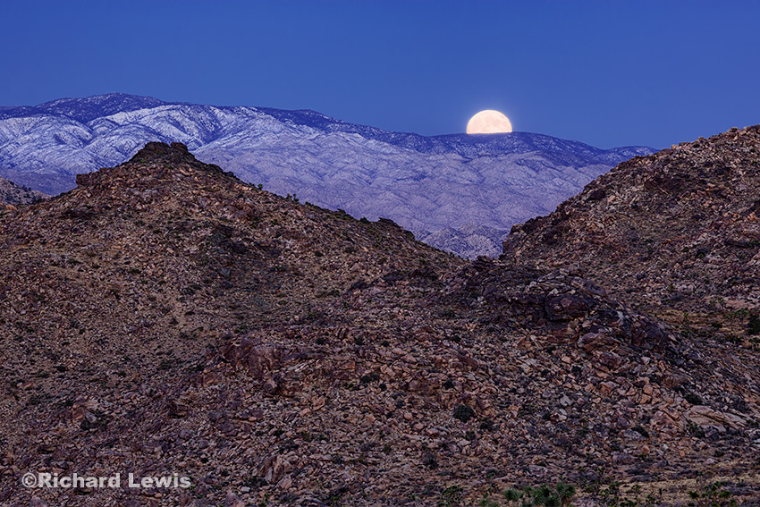 Moonset in Joshua Tree by Richard Lewis