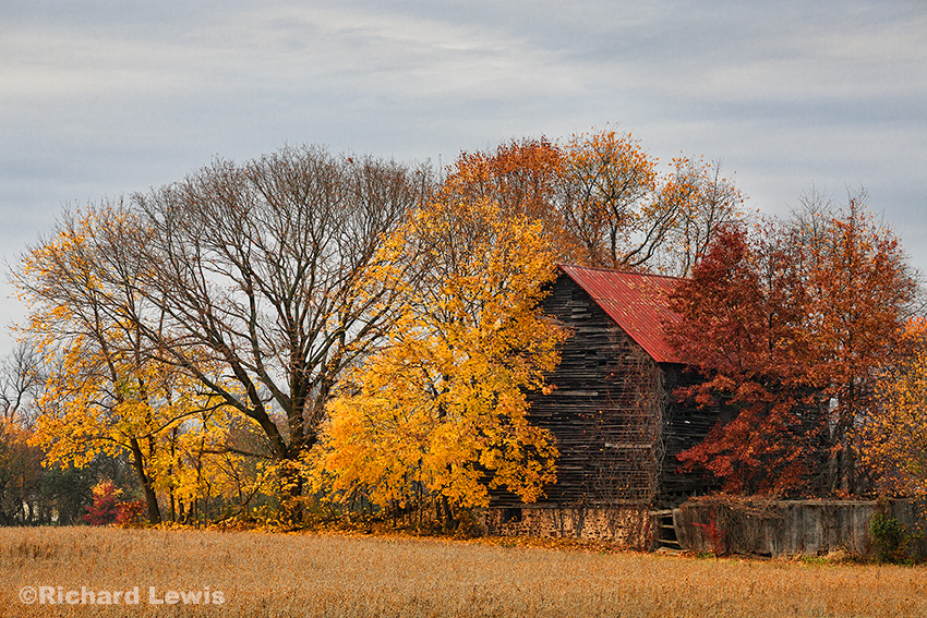 Old New Jersey Barn in Fall by Richard Lewis