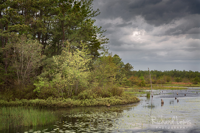 Edge of the Bogs in the Franklin Parker Preserve by Richard Lewis