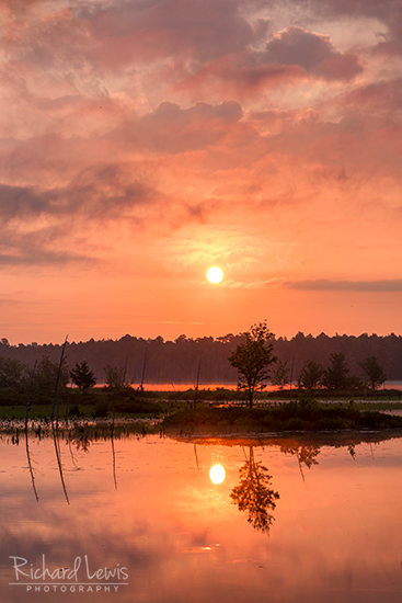 Just Another Jersey Sunrise in the Pinelands by Richard Lewis