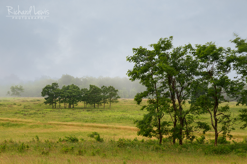 Big Meadows in Shenandoah National ParkOn A Windy Morning by Richard Lewis