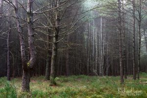 Misty Forest in the Delaware Water Gap by Richard Lewis
