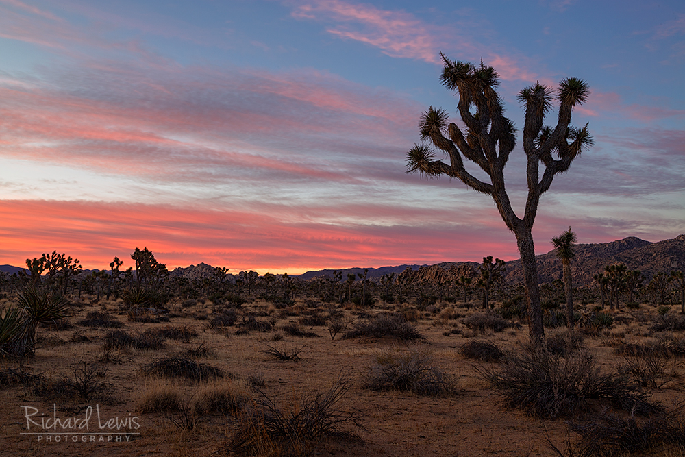 Dawn On The Boy Scout Trail In Joshua Tree National Park
