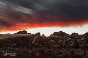 Evening Fire In Joshua Tree National Park