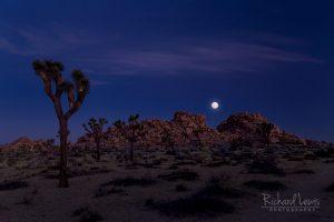 Moon Set At Dawn In Joshua Tree National Park