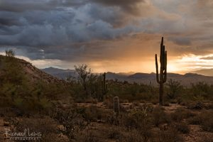 McDowell Park Desert Morning Arizona