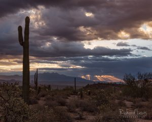 Arizona Desert Morning Light