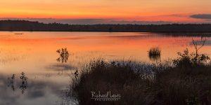 Pine Barrens Evening Light Brendan Byrne State Forest