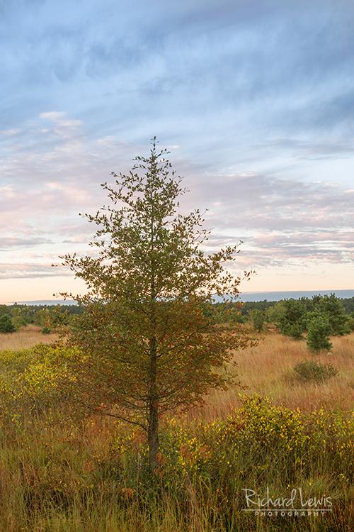 Franklin Parker Preserve New Jersey Pine Barrens