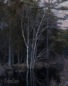 Pinelands Franklin Parker Preserve