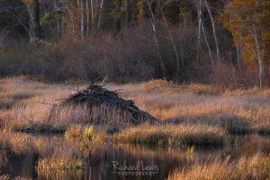 Big Bad Beautiful Beaver Lodge New Jersey Pine Barrens