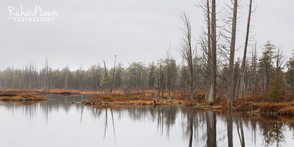 Rainy Evening With the Cedars Pine Barrens