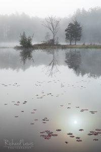 Spring Mist New Jersey Pine Barrens