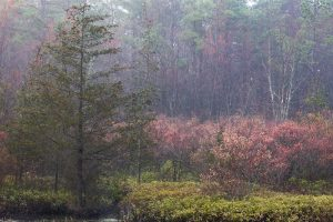 Misty Textures in the Pine Barrens