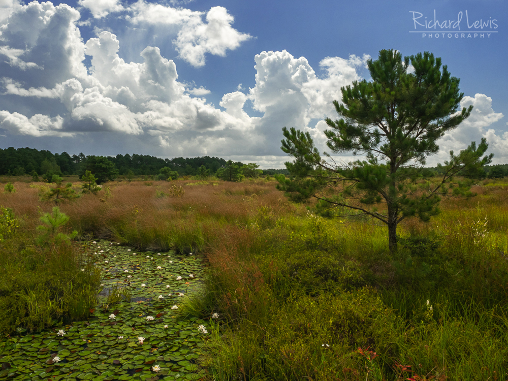 Late Morning Contrasts in the Pinelands