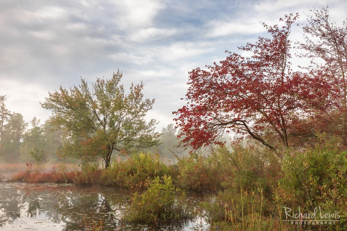 Pine Barrens Fall Along The Mullica