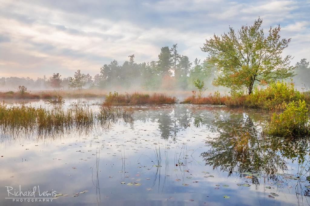 Pinelands Mullica River Mist