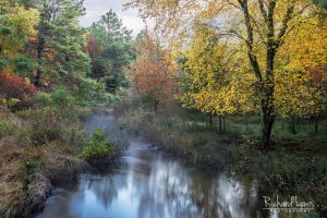A Fall Pine Barrens Scene With A Touch Of Mist