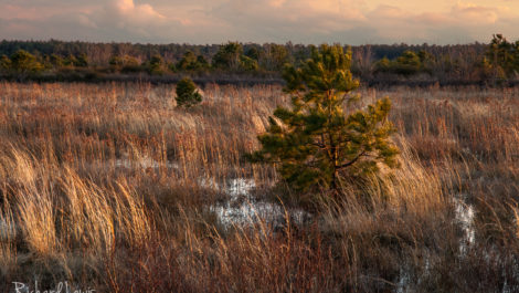 Last Light On A Stormy Evening In The Pine Barrens