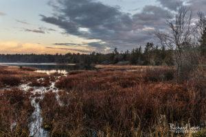 Whitesbog Morning In The Pine Barrens
