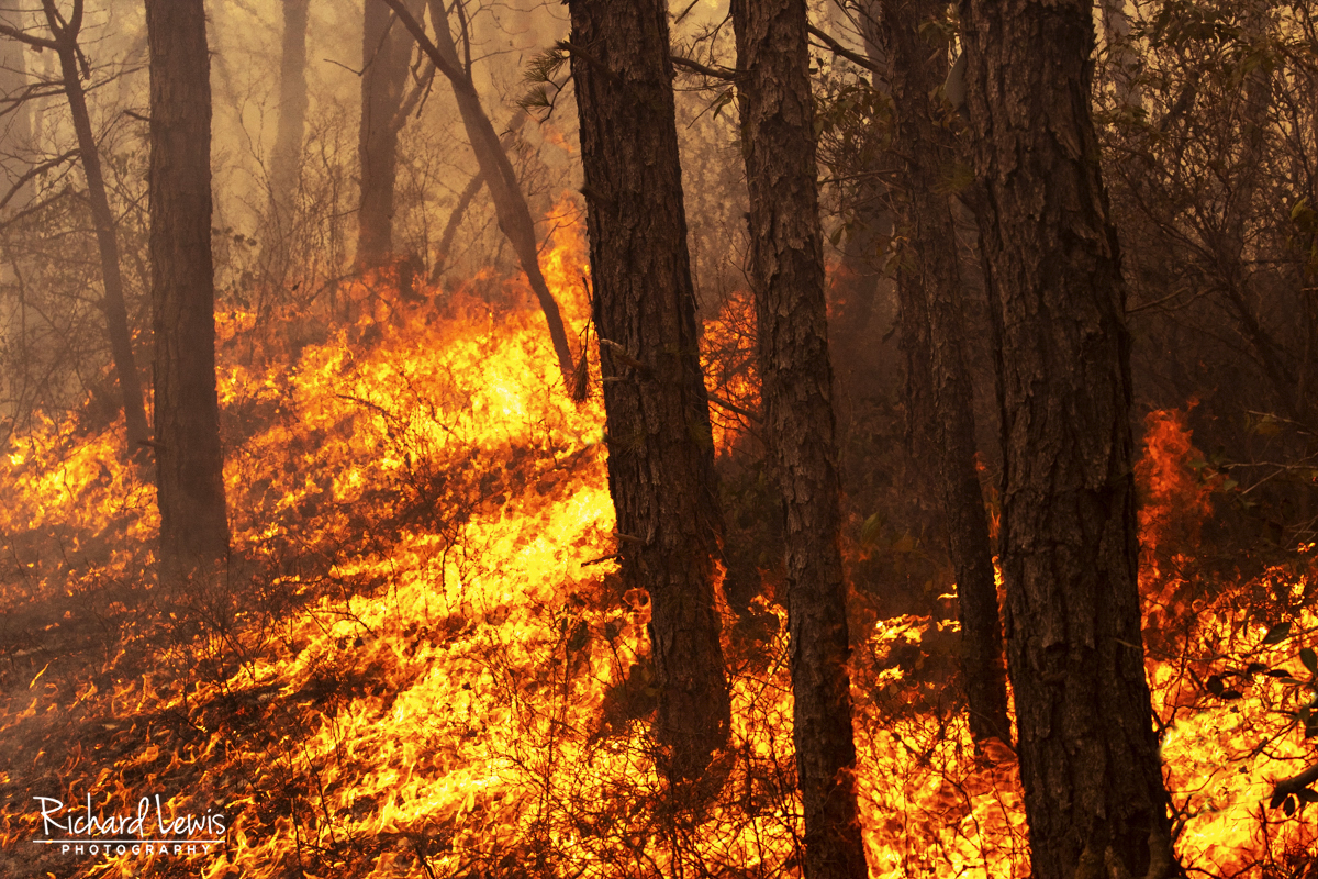 Pine Barrens Forest Fire