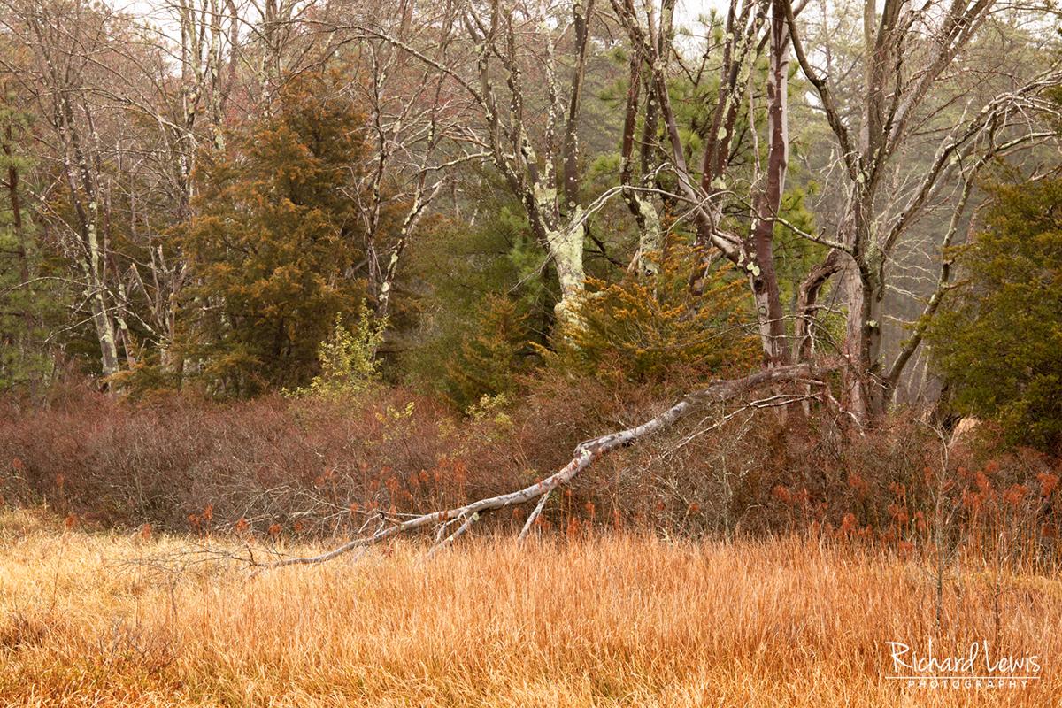 Pine Barrens Textures