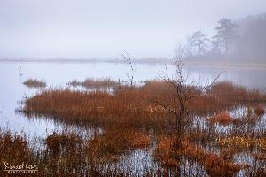 Pine Barrens Foggy Spring Morning
