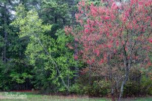 Intimate Spring Landscape Pine Barrens